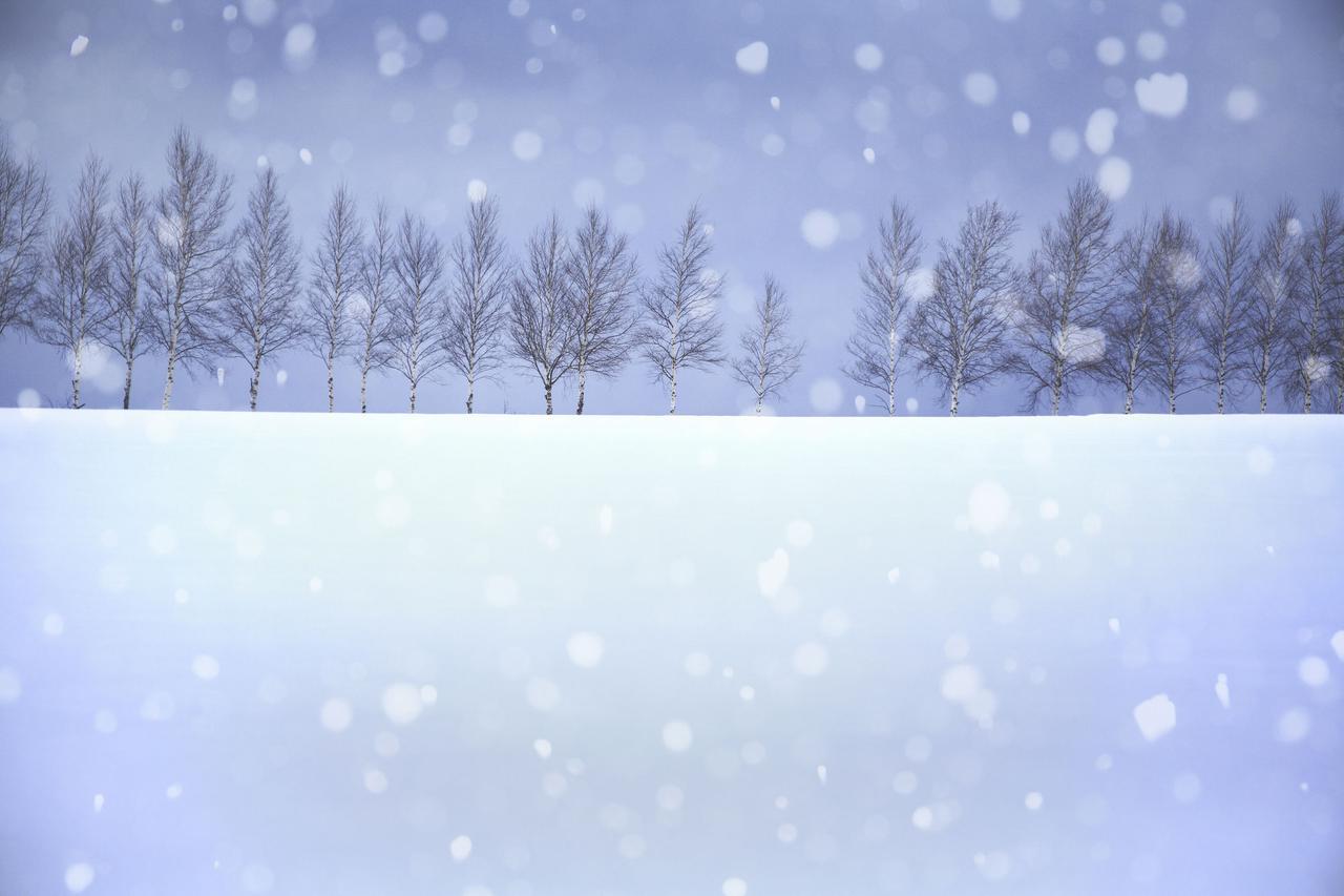 画像1: 雪遊びにおいて大切なのは雪質! 雪だるま・かまくら作りに向いているものとは?