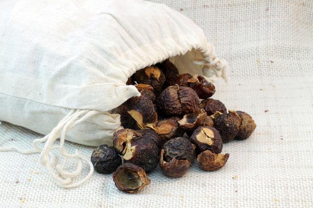 画像: 「ソープナッツ」は天然の界面活性剤が豊富な木の実!
