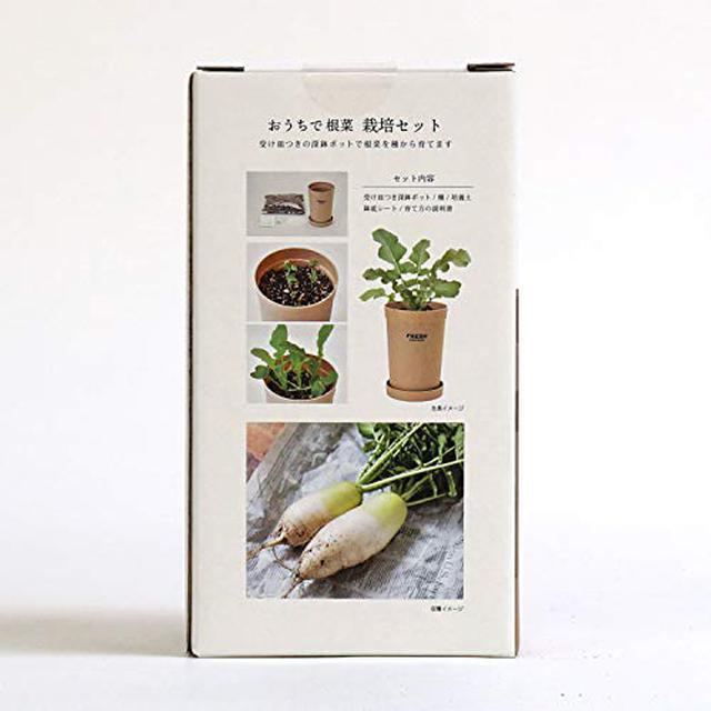 画像2: 「ベジコンテナ」など、自宅で手軽に栽培できるおすすめ「野菜キット」を3つ紹介!