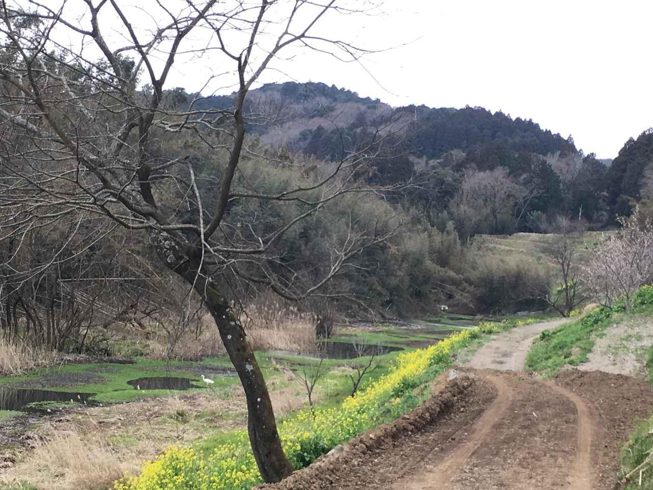 画像: 3月のキャンプは、菜の花や桜など様々なお花見が楽しめる時期ではあります。