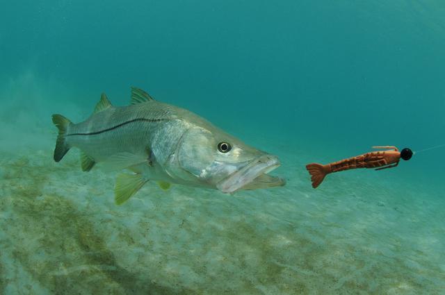 画像: 釣りに必要な餌の種類は大きく分けて4種類!