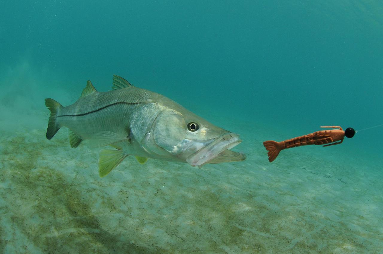 画像: 【釣り餌の種類と基本】状況や場面・狙っている魚に合わせて餌を選ぶ! 生き餌・死に餌・疑似餌・練り餌とは?