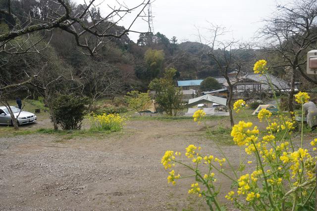 画像: 筆者撮影「3月上旬、きれいな花を楽しめます」