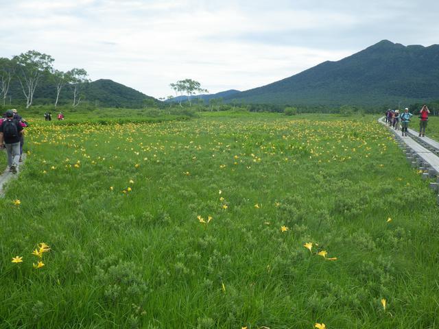画像: 筆者撮影 尾瀬に咲くニッコウキスゲ