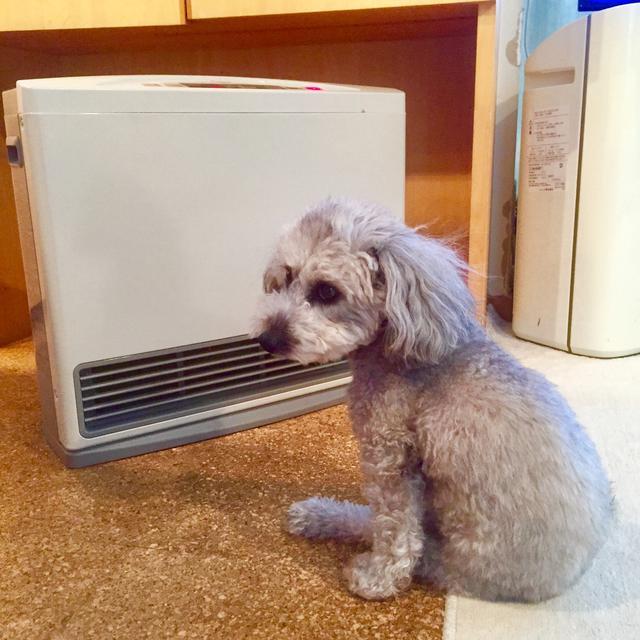 画像1: 【カセットガスストーブ】コンパクトでコスパが良い暖房器具 冬キャンプで活躍!