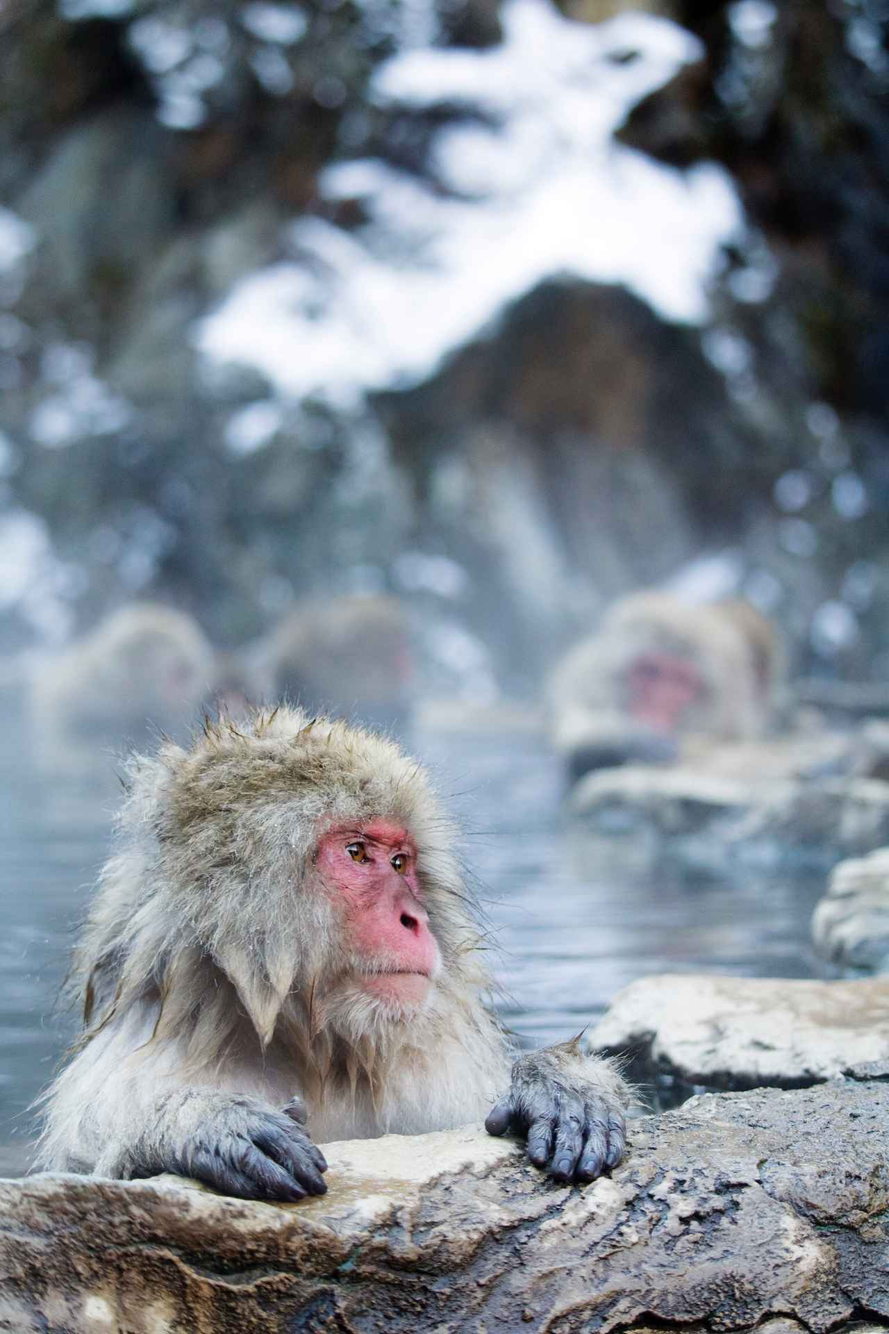 画像2: 「勝浦つるんつるん温泉直営オートキャンプ場」宿泊レポ 天然温泉あり・薪使い放題