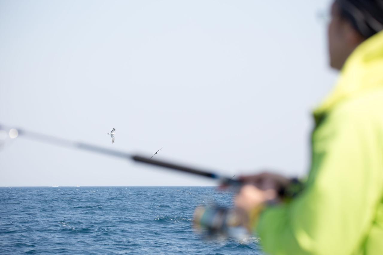 画像: 【道具④】海釣りのエサはアオイソメとアミエビを用意! ちょい投げ・サビキ釣り仕掛けに使用可能