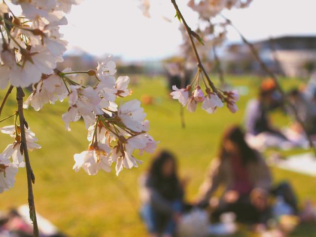 画像: リッチなお花見におすすめ! ハイバック&軽量アウトドアチェア4選 - ハピキャン(HAPPY CAMPER)