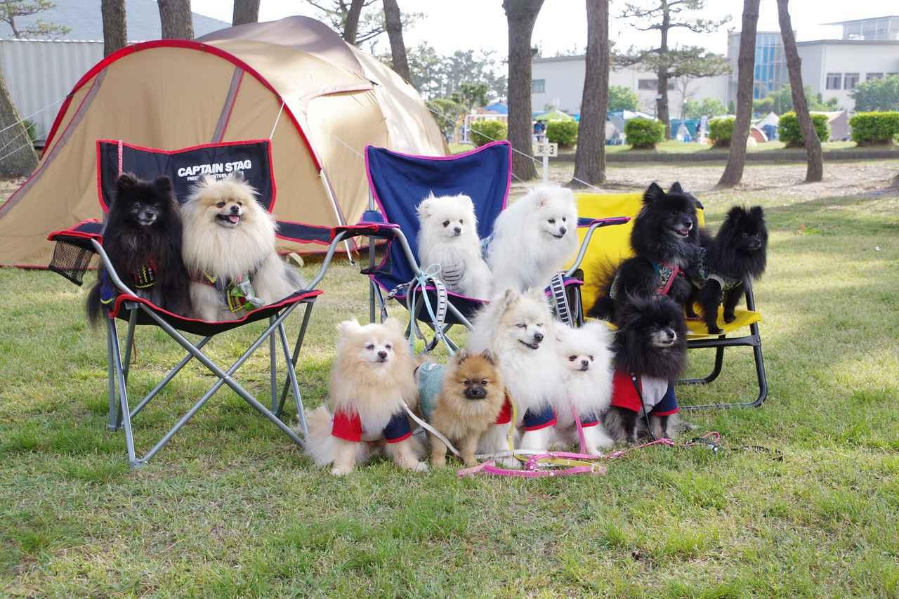画像: 【おすすめキャンプ場35】浜名湖に浮かぶ「渚園キャンプ場」はワンちゃん連れにもおすすめ - ハピキャン(HAPPY CAMPER)