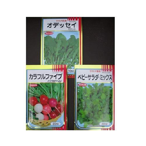 画像3: 【ベランダ菜園】自作プランターで簡単栽培! おすすめ早採れ野菜やハーブを紹介!