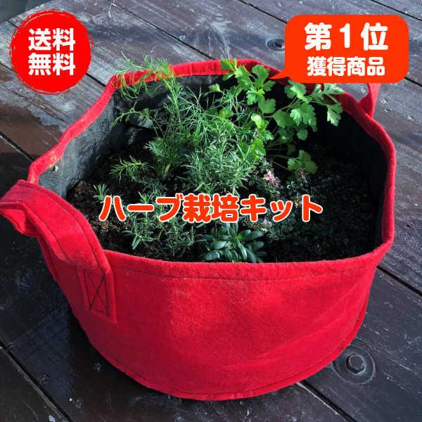 画像2: 【家庭菜園はプランターで簡単に】ベランダなどの狭いスペースでも野菜の育て方を習得してプランターで簡単菜園を楽しもう!