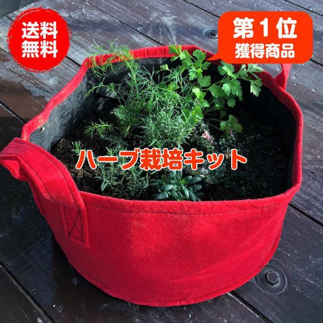 画像2: 【プランターで簡単家庭菜園】虫対策をして野菜作り&栽培キットに挑戦してみよう