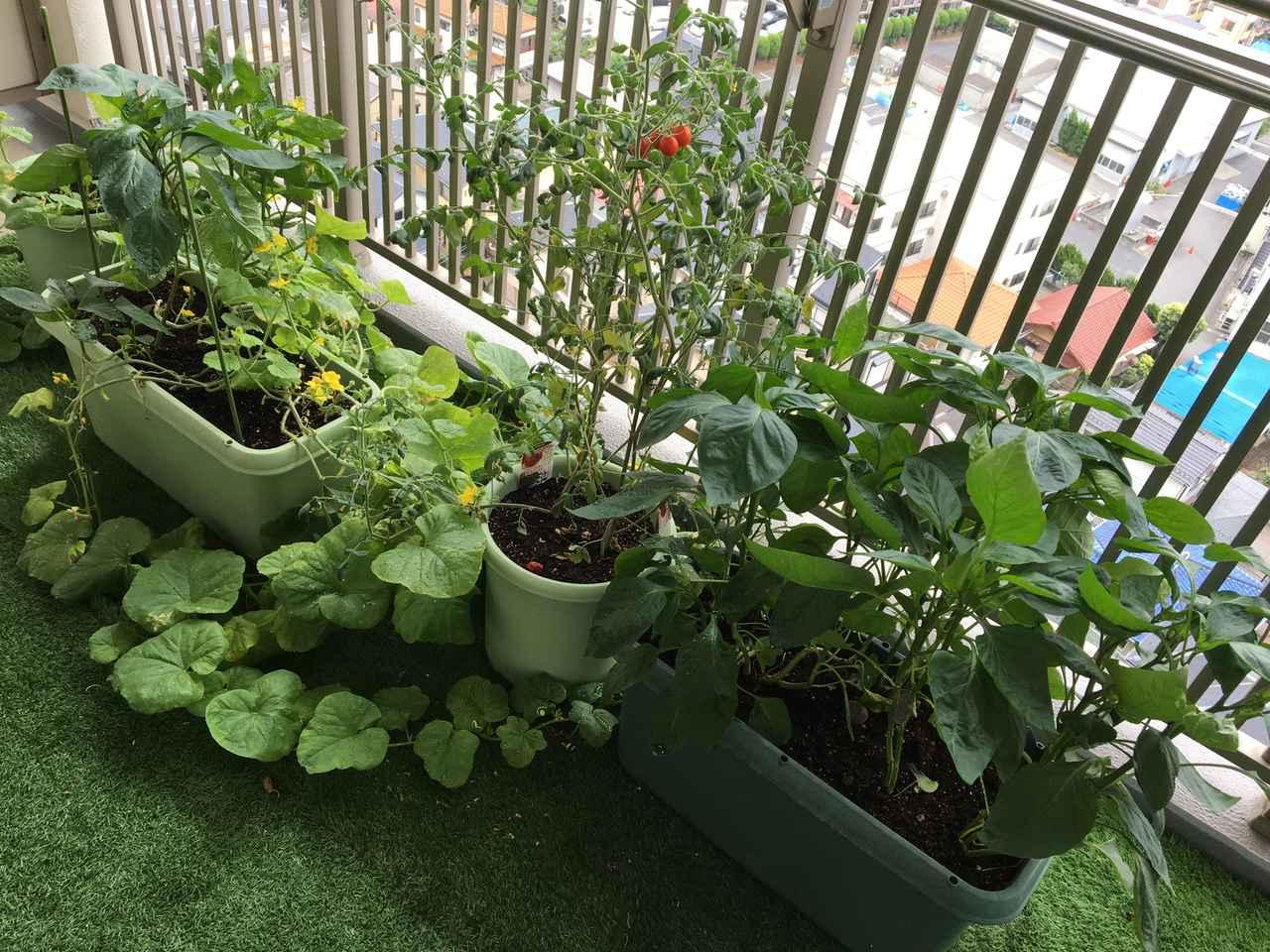 画像: 家庭菜園をベランダで簡単にやるならプランターがおすすめ!ミニトマト・オクラ・しそ・葉ねぎ等が作れる