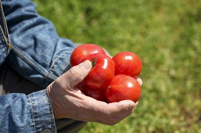 画像: 抗酸化物質「リコピン」など栄養豊富なトマト 体内の熱を冷まし、食欲不振など夏バテにも◎