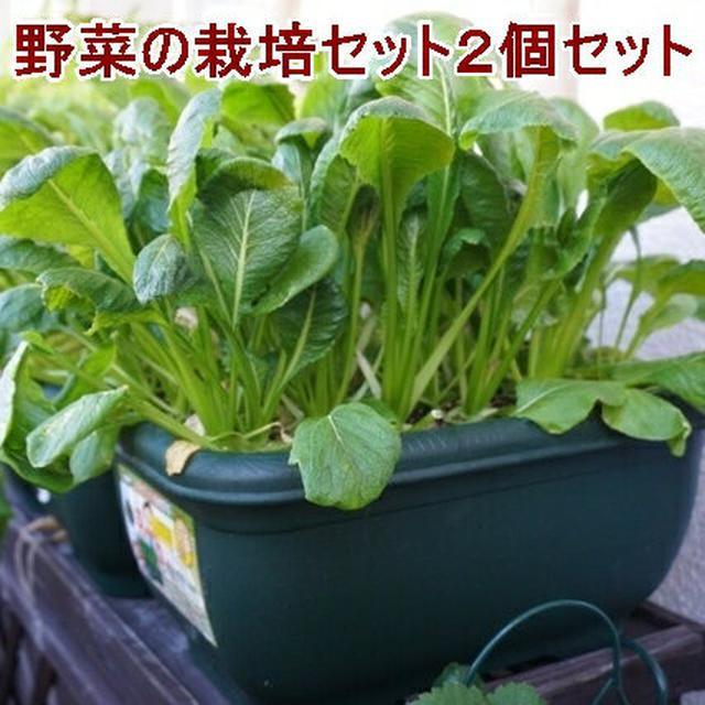 画像4: 【プランター菜園】プランターで手軽に野菜を栽培しよう! 色とりどりのベランダ菜園