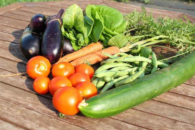 画像: 【初めての家庭菜園】プランターで簡単に育てられる野菜作り!植え方の工夫で虫対策もOK! - ハピキャン(HAPPY CAMPER)