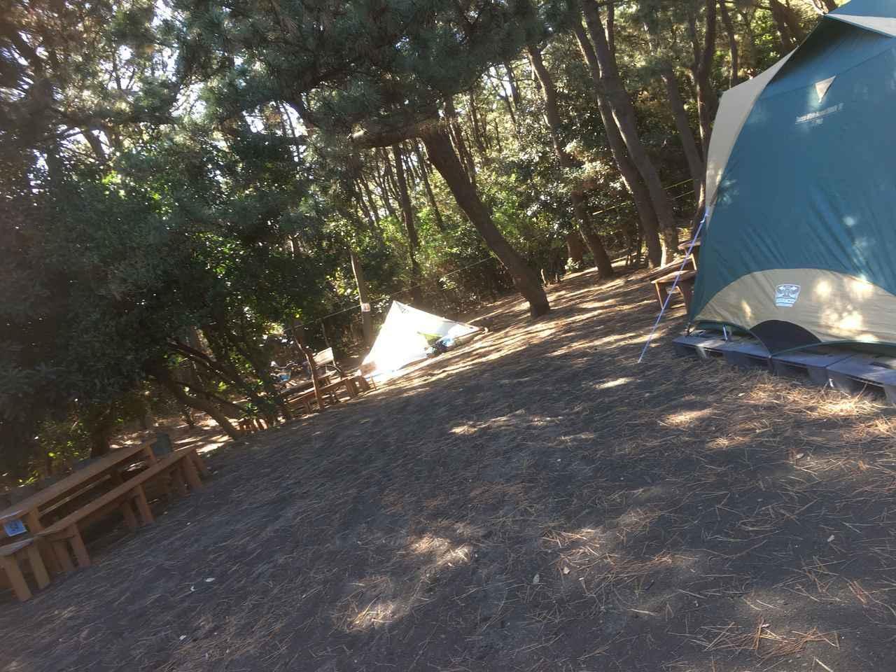 画像: 筆者撮影 柳島キャンプ場は木に囲まれていて、日影が多い!