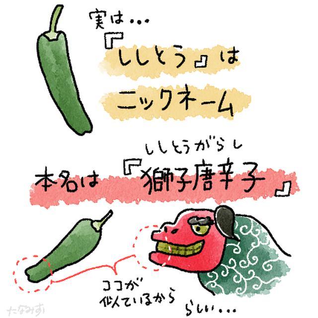 画像2: 意外と知らない? ししとうの秘密 夏に嬉しい栄養たっぷり