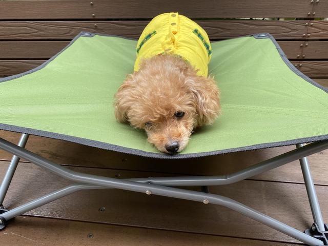 画像2: 愛犬とのキャンプに必要な物③寝床編『ドックコット』が便利です!