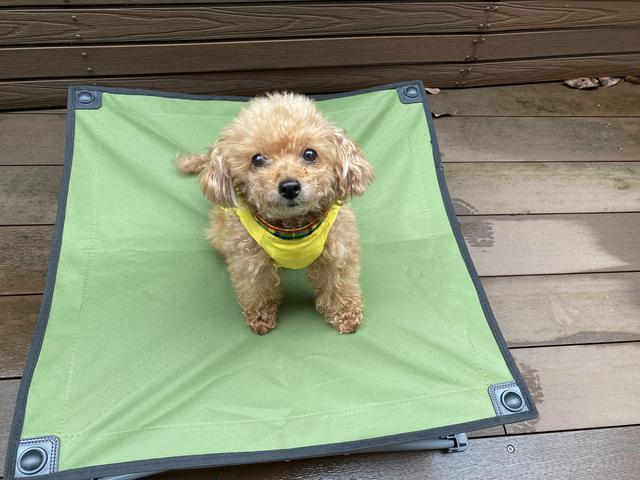 画像1: 愛犬とのキャンプに必要な物③寝床編『ドックコット』が便利です!