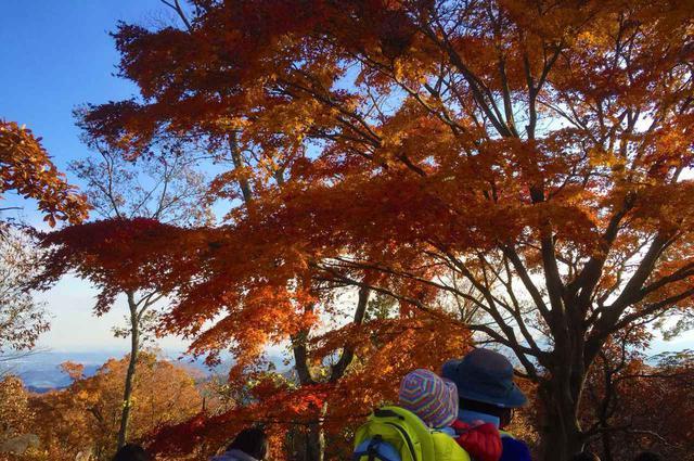 画像: 【子連れ登山】紅葉の高尾山へ家族でハイキング コースが色々あり初心者におすすめ! - ハピキャン(HAPPY CAMPER)