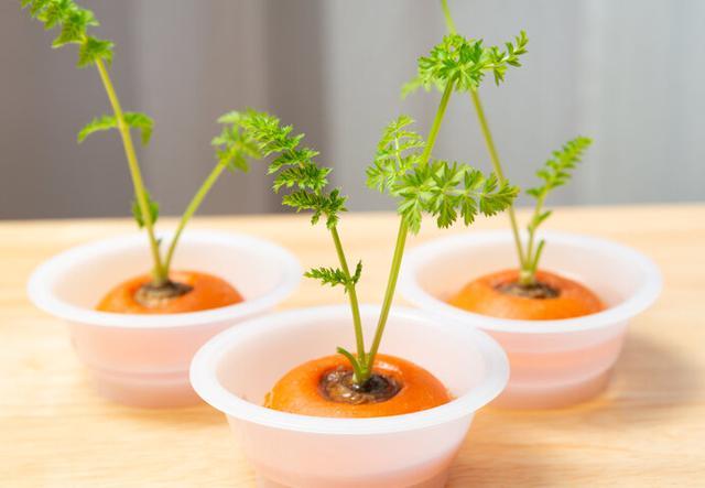 画像: 馴染みの野菜のヘタでも挑戦できます。捨てないで!