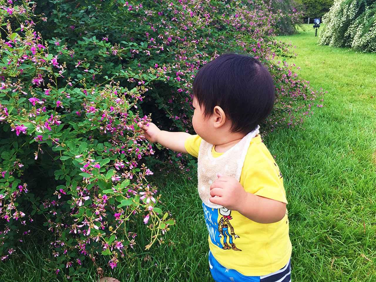 画像: 筆者撮影 萩の花をめでる0歳児 @茨城県,偕楽園