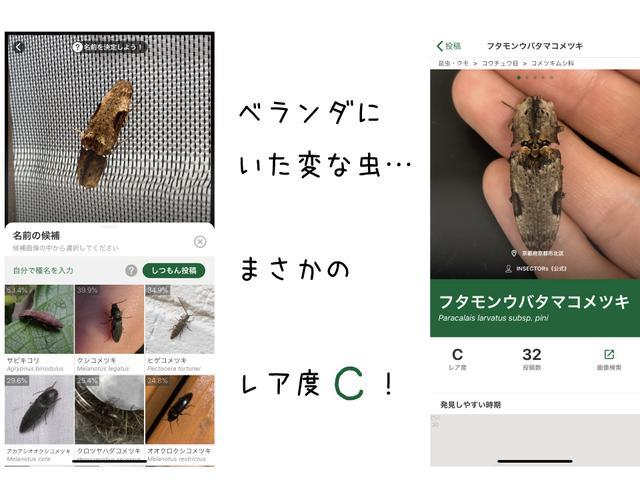 画像: 筆者作成 バイオームを知る前なら無視していたであろう虫がまさかのレアもの!