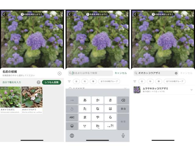 画像: 手順4.(左)該当種類を選択 (中・右)候補にない場合自分で入力して検索可能 ※画像はスクリーンショット (筆者作成)