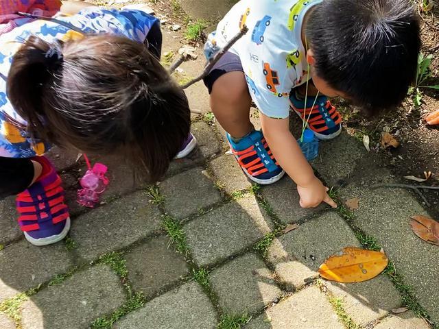 画像: 筆者撮影 「おおきなダンゴムシ!」とオオヒラタシデムシの幼虫を追いかける子供たち