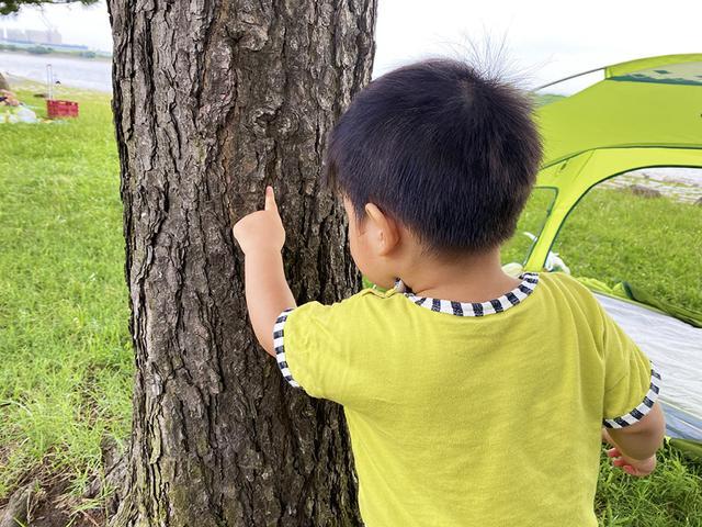 画像: 筆者撮影 松にアリがいることを発見した息子