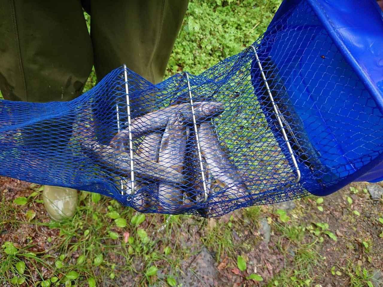 画像: 筆者撮影 キャンプ場周辺の川で釣れたイワナ