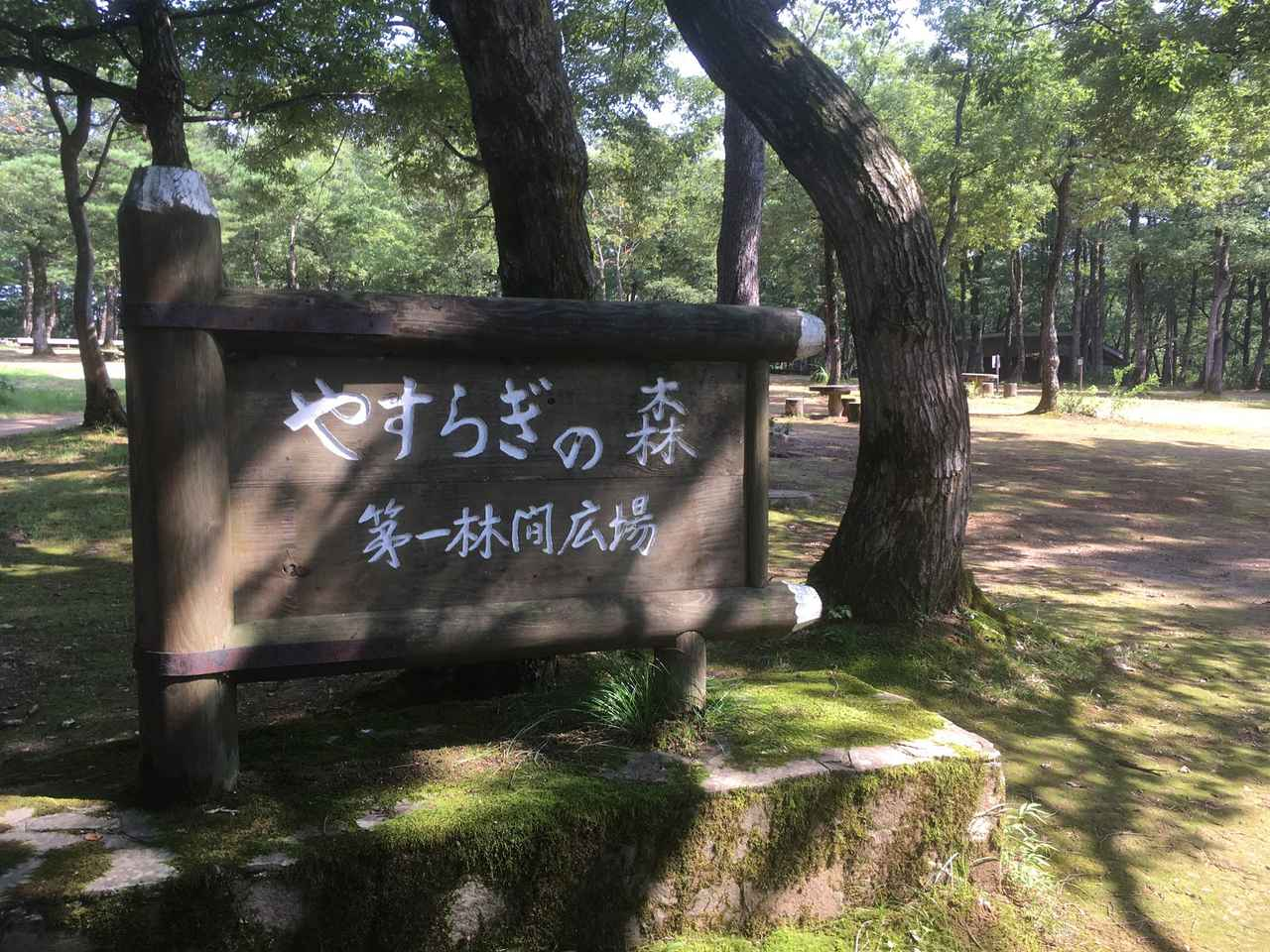 画像: 楢の木に囲まれたキャンプ場 (筆者撮影)