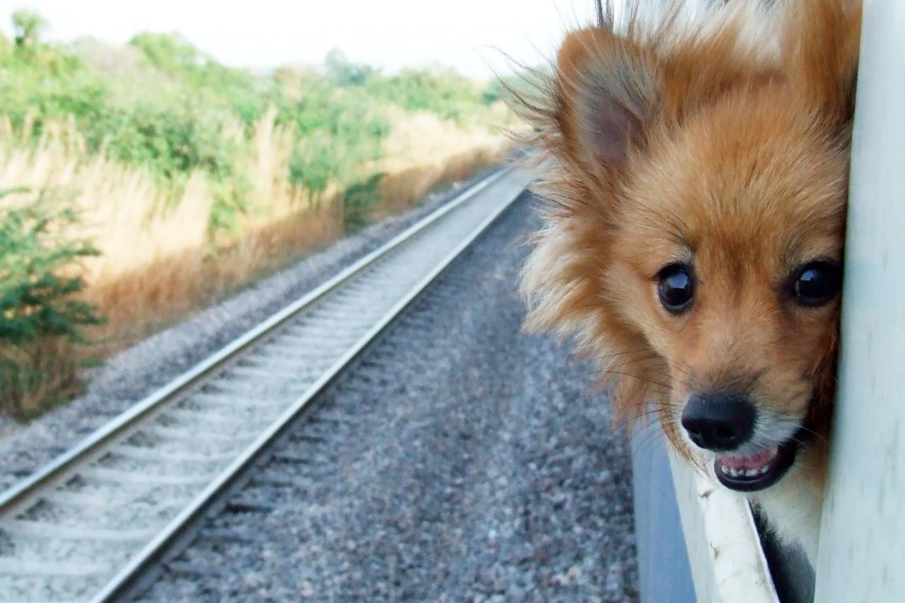 画像: SNSで話題となった最新「ペットとお出かけリュック」をご紹介!車や免許を持っていない方でもOK!