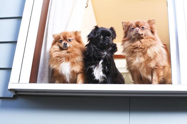画像: ペット(犬・猫など)と一緒にアウトドアへ! 自宅で癒されるのもいいですが外でも遊びたいという方へ