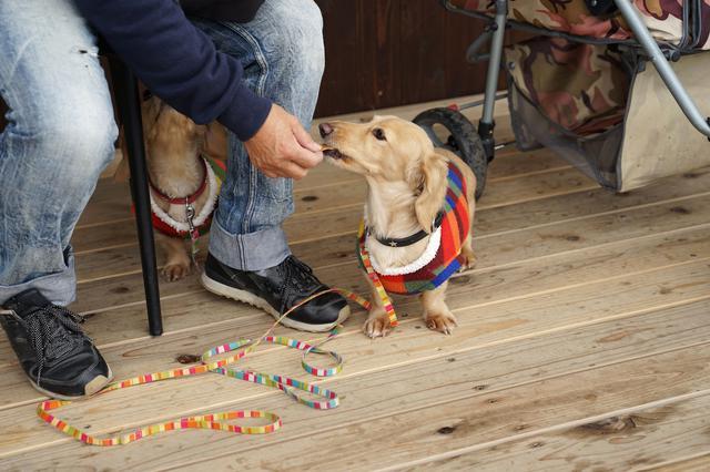 画像: 安全と利便性そして可愛さのために!キャンプ場ではドッグウェア&シューズの着用を考えたい