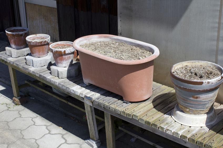 画像: 【唐辛子の栽培方法①】プランターに唐辛子の苗を植え付けよう! こだわりの土や肥料を選ぼう