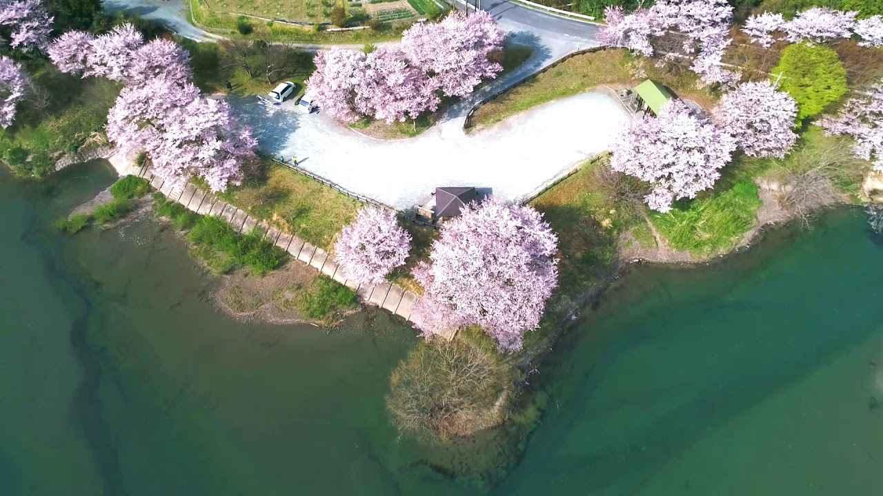 画像: 桜とカヌーと www.youtube.com