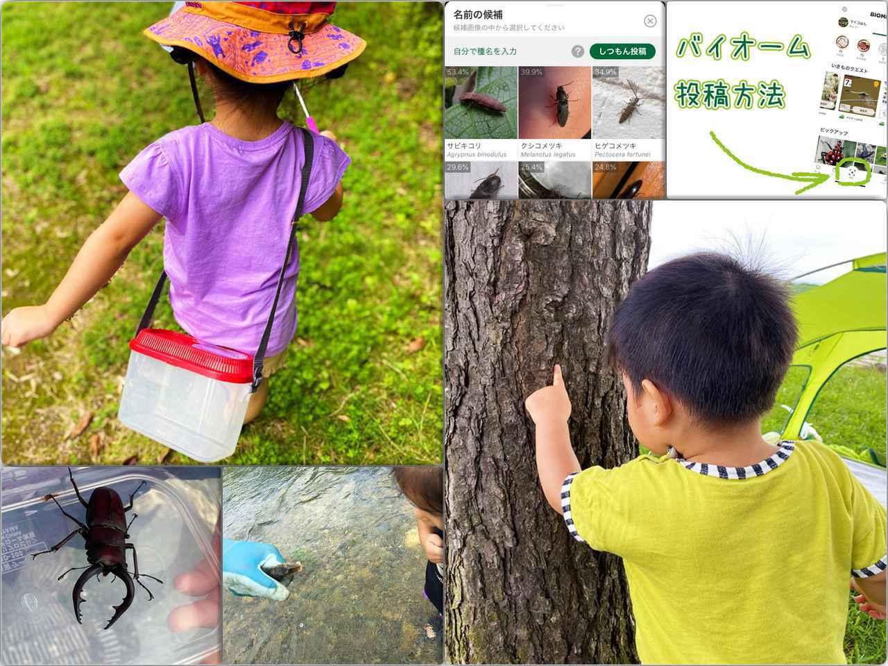 画像: 親子キャンプにおすすめのアプリ「Biome(バイオーム)」!昆虫採集・動植物観察の楽しみが倍増 - ハピキャン(HAPPY CAMPER)