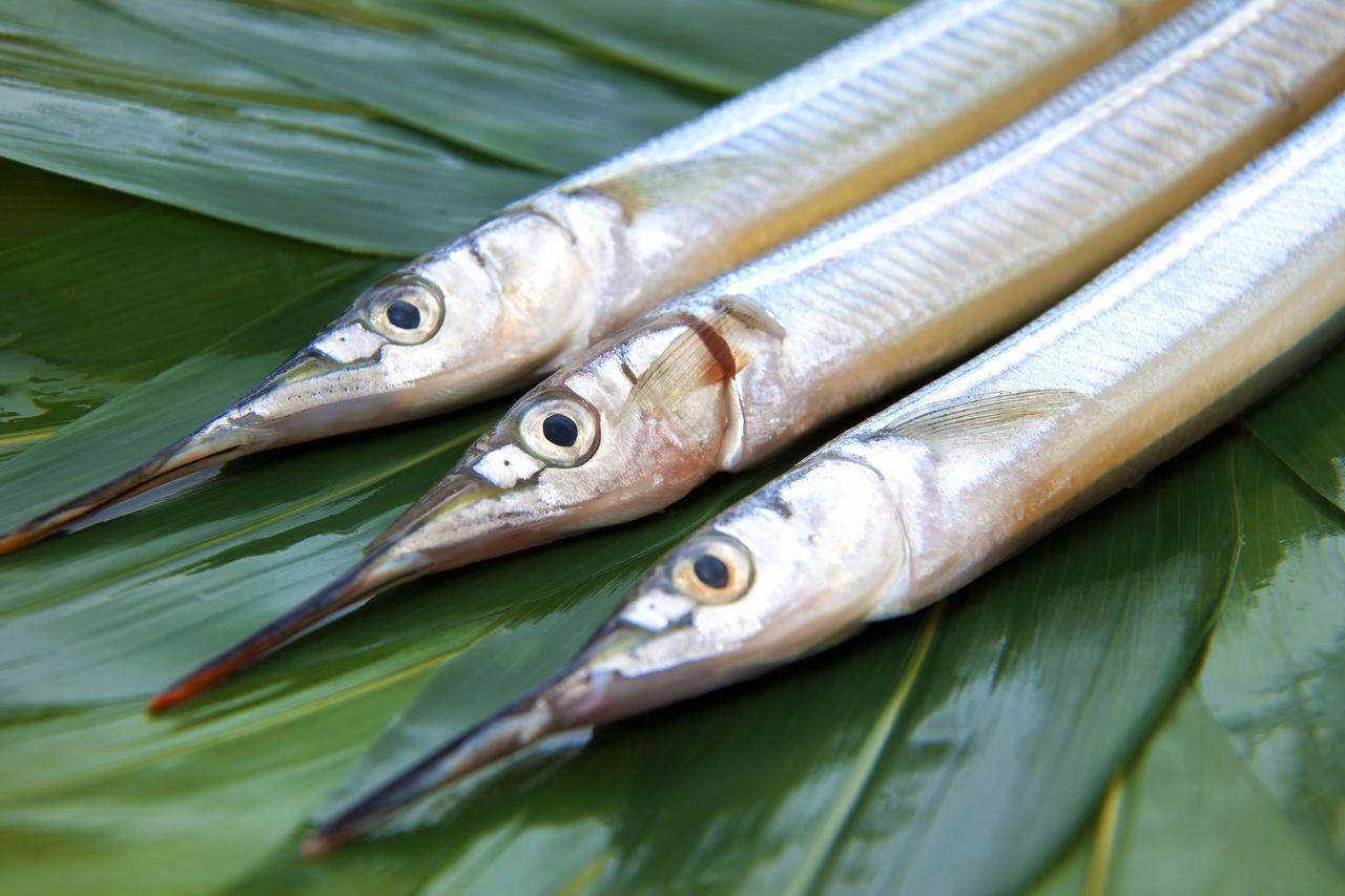 画像: サビキ釣りの次は高級魚サヨリを釣る「サヨリ仕掛け」に挑戦! おすすめの道具や仕掛けも紹介!