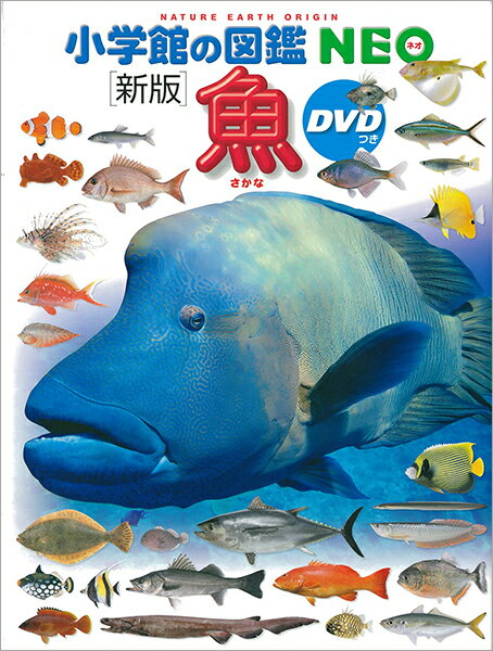 画像6: 【関東近郊】磯遊びを楽しむコツとおすすめスポットをご紹介!海の生きものを観察しよう
