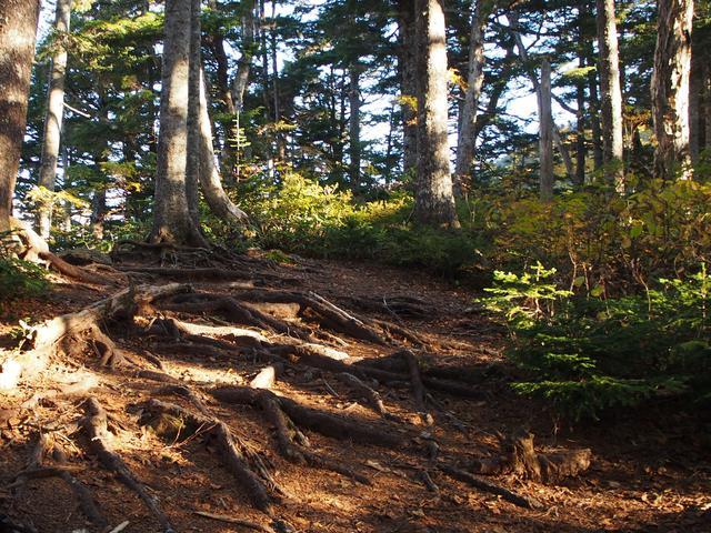 画像: 木の幹が這う登山道 (筆者撮影)