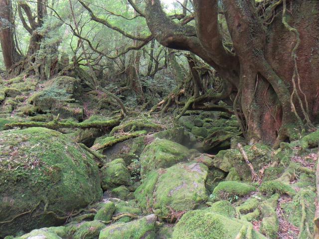 画像: 縄文杉とは?