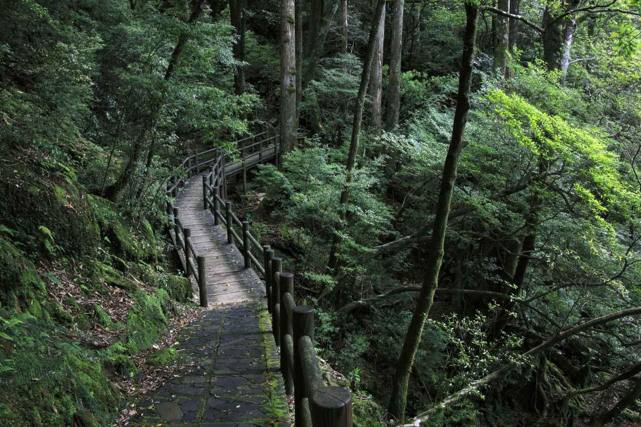 画像: 【基本情報】混雑する時期を考慮した屋久島・縄文杉トレッキングのベストシーズンは? 長距離なので特に登山初心者は時間に余裕をもつべし