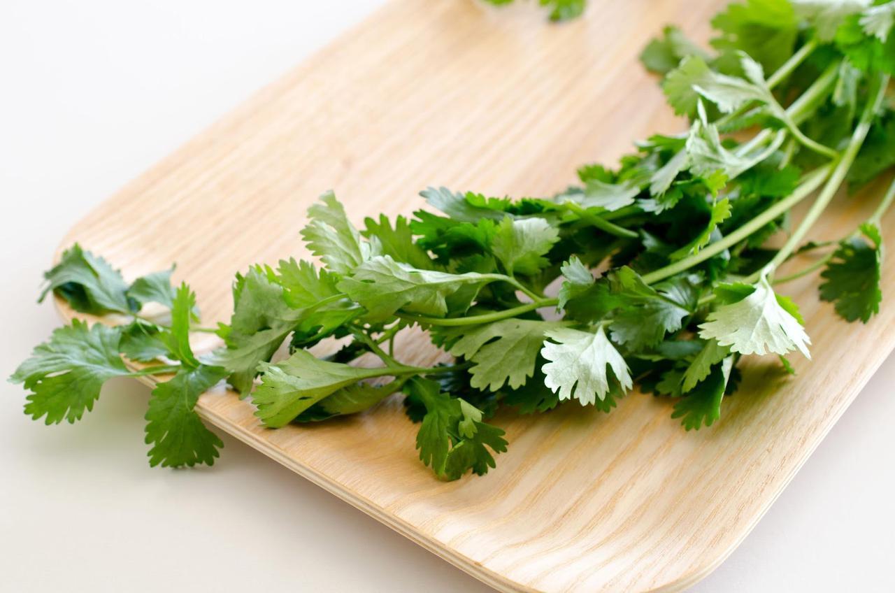 画像: ベランダ菜園におすすめの野菜その4:パクチー(コリアンダー)