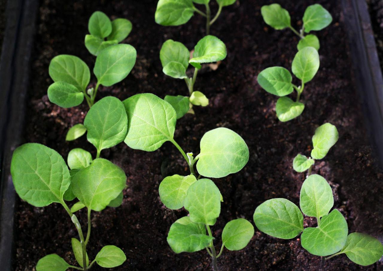 画像: ベランダ菜園は意外と簡単! 野菜栽培を成功させるコツは種まきや苗の植え付け時期を守ること