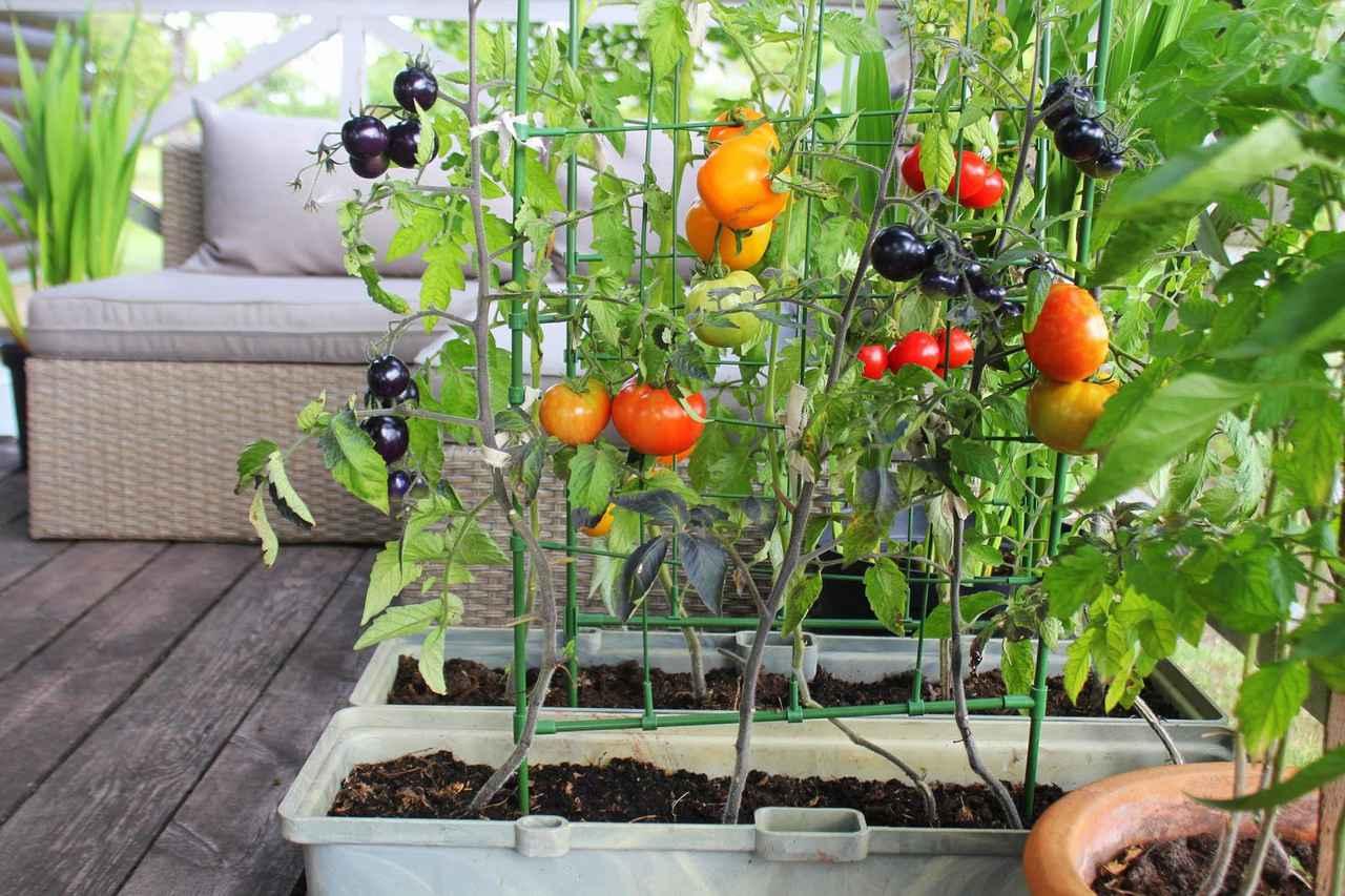 画像: 自分で栽培した野菜は特別なおいしさ! お手軽な野菜からベランダ菜園を始めておうち時間を楽しもう