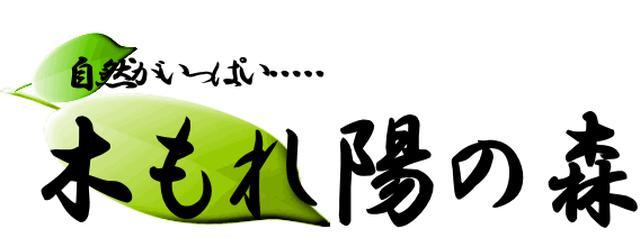 画像: 岡山県津山市加茂町のキャンプ場木もれ陽の森(こもれびの森)