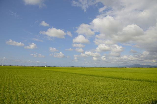 画像: 新潟の田園風景イメージ