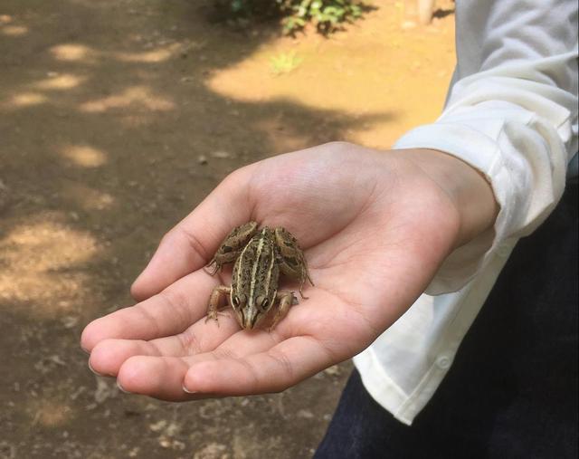 画像: 素手でカエルを捕まえました (筆者撮影)